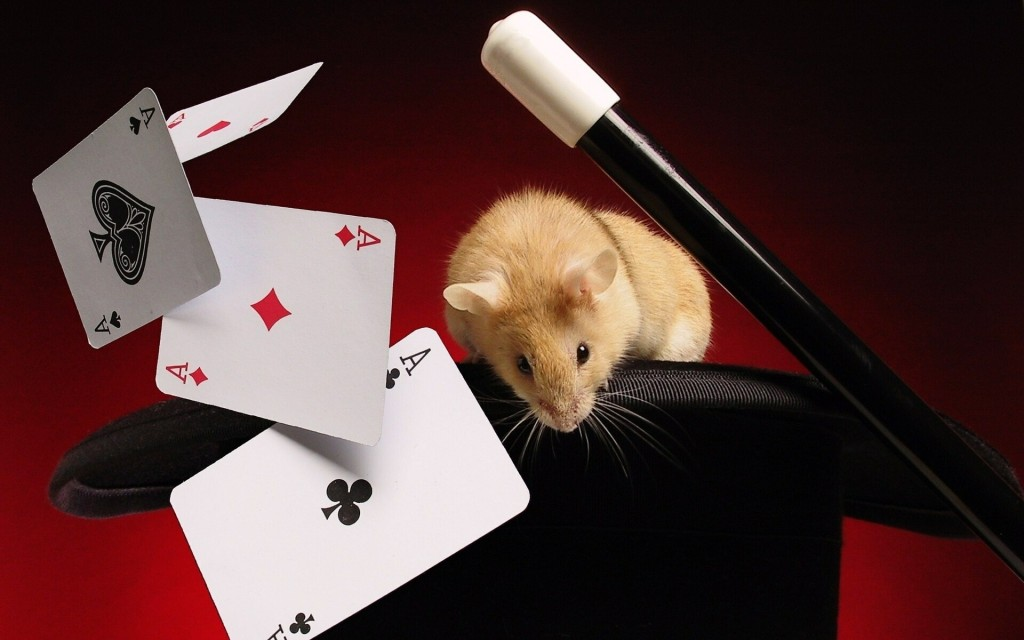 _poker_cards_rodent